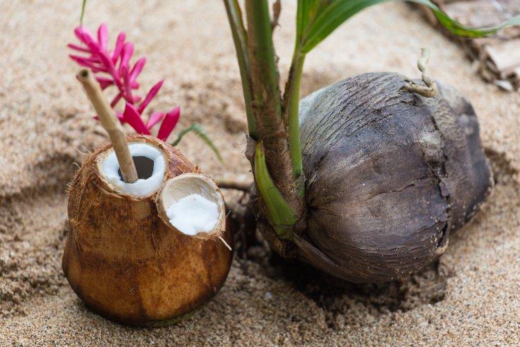 coconutwater_Welcomedrink